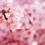 春の募集について